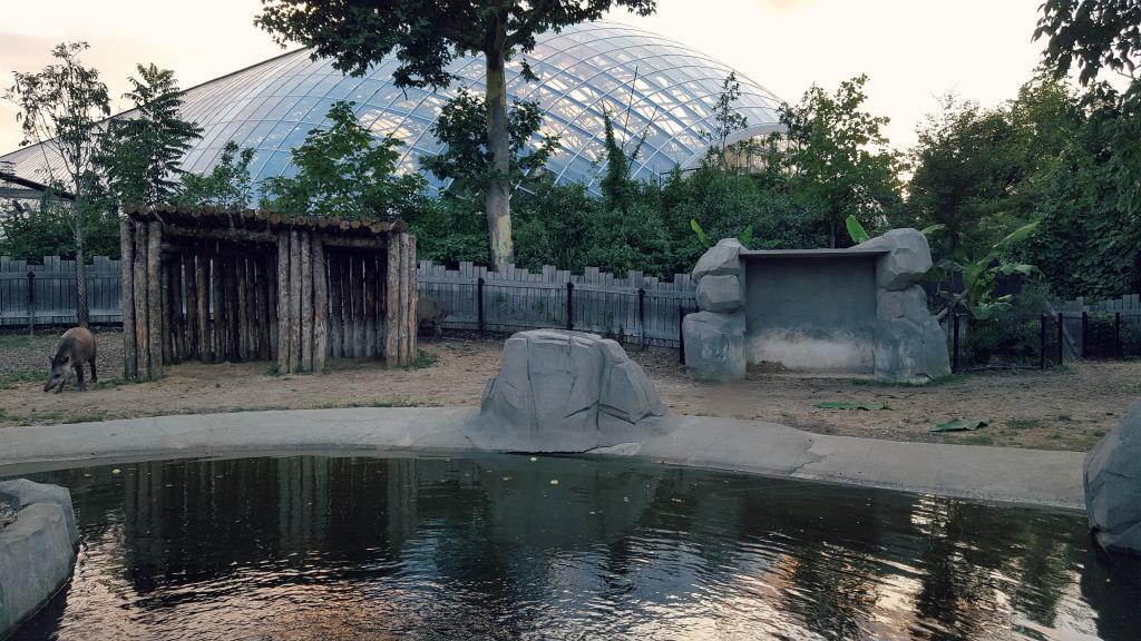 notre soir e au parc zoologique de paris paris pages blog. Black Bedroom Furniture Sets. Home Design Ideas